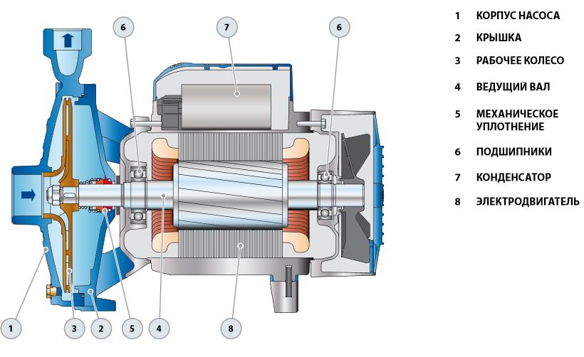 схема центробежных насосов для воды Pedrollo